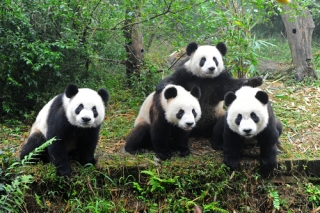 Extension tour: Chengdu 2 Nights Tour (Including Domestic Flights)